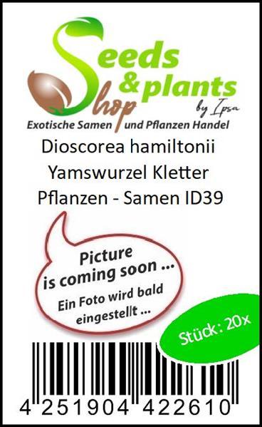 20x Dioscorea hamiltonii Yams Yamswurzel Samen Kletterpflanze ID39