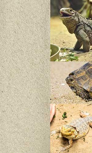 Terrarien Bodengrund Reptiliensand