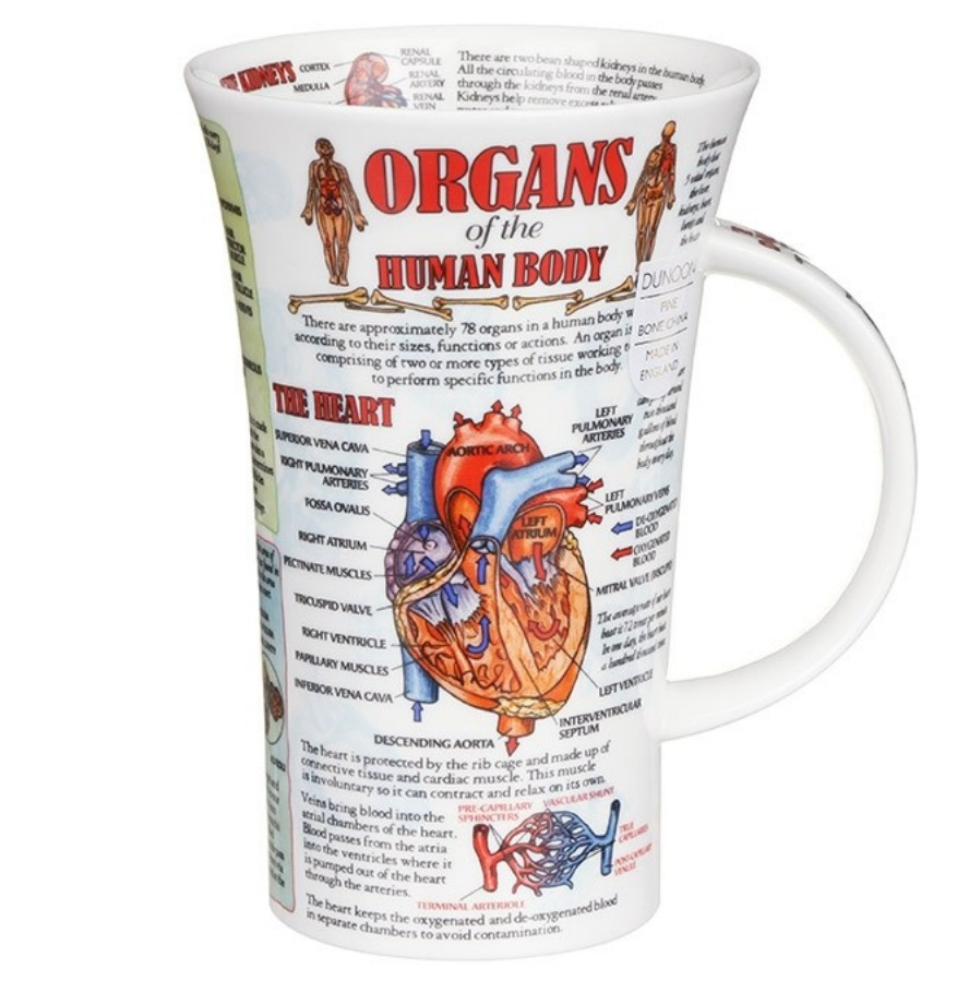 Glencoe Becher Dunoon Organs Of The Human Body Ebay