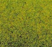 NOCH 50210 Frühlingswiesen-Gras 100 g Beutel