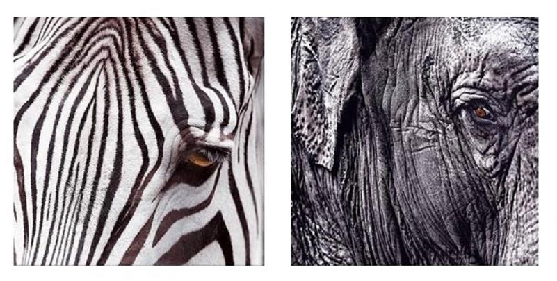 https://bilder.afterbuy.de/images/80259/16993_wandbilder_elefant_zebra.jpg