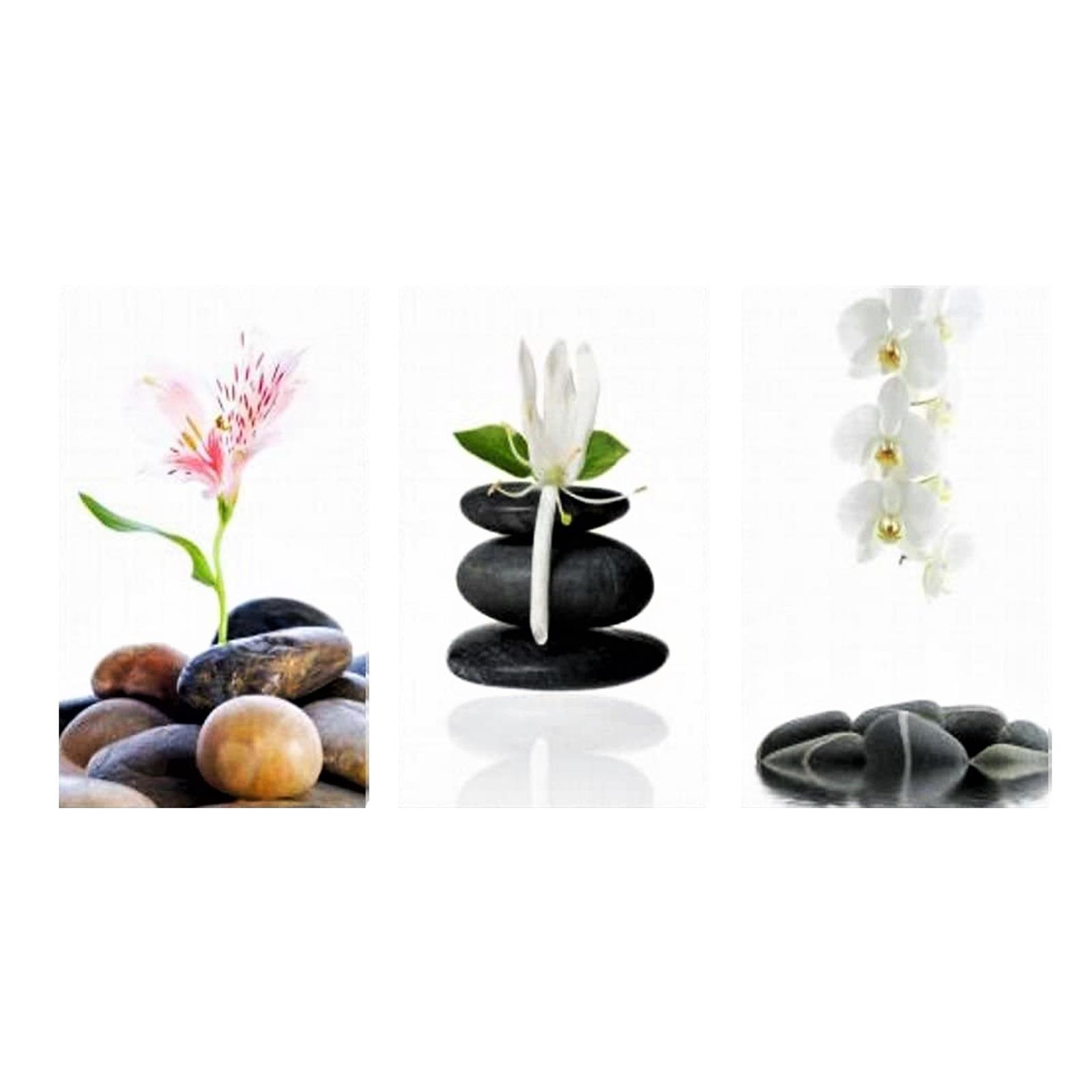 3 Orchideen Wandbilder