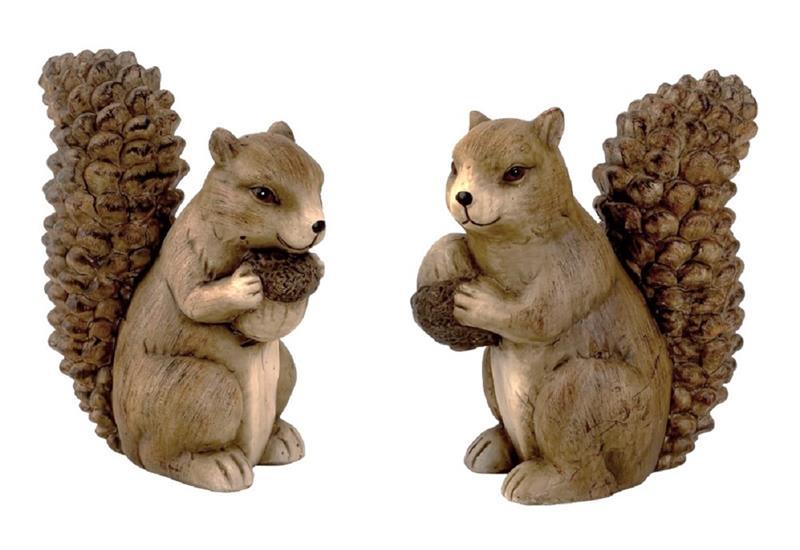 Sibirische Eichhörnchen Kaufen