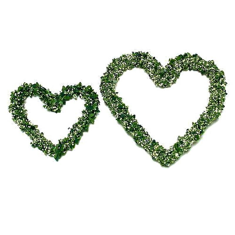Mini - Buchs - Beeren Herz / 2 Stück 10cm - 15cm !!!