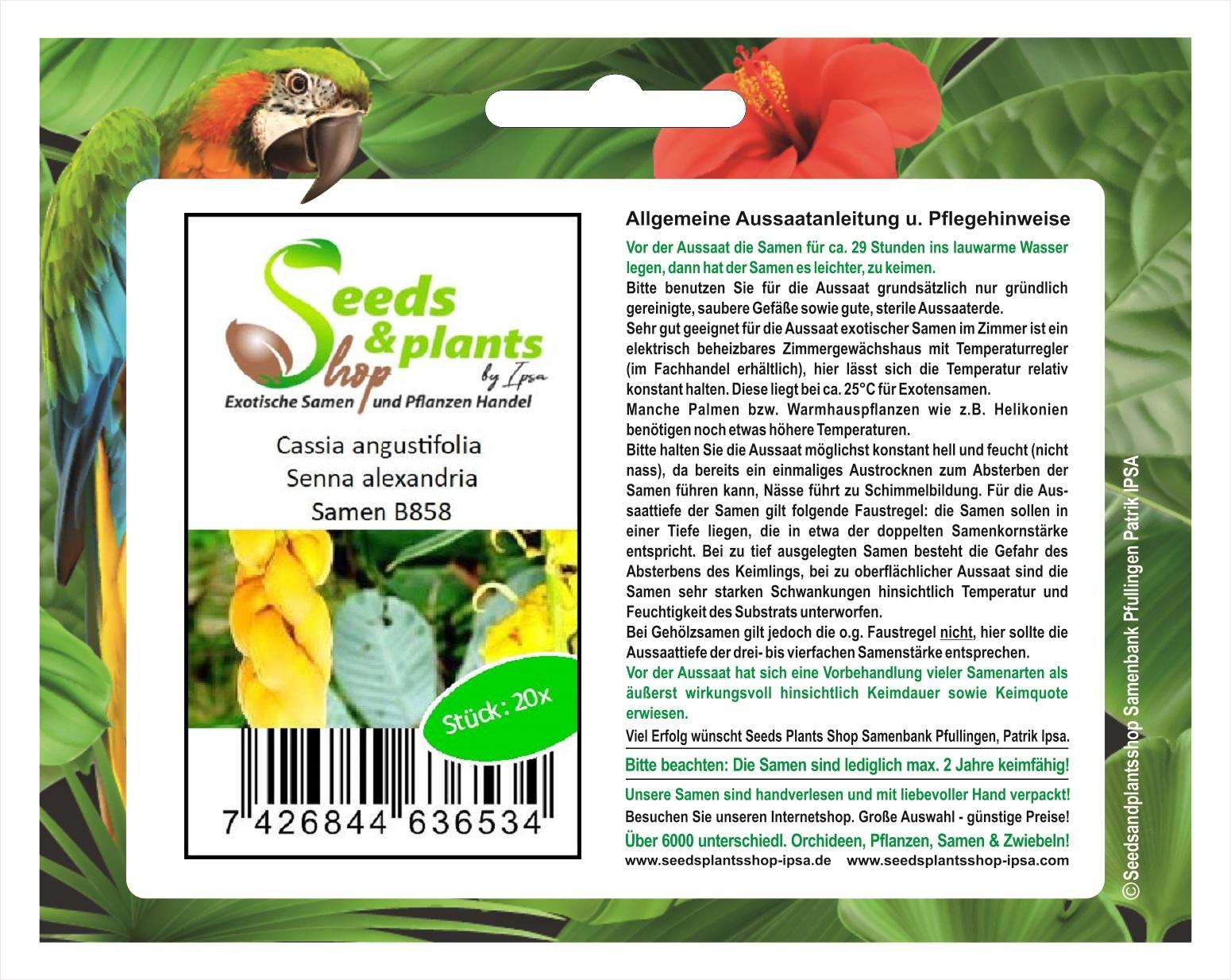 Exot Pflanzen Samen exotische Saatgut Zimmerpflanze Zimmerbaum KAPOKBAUM