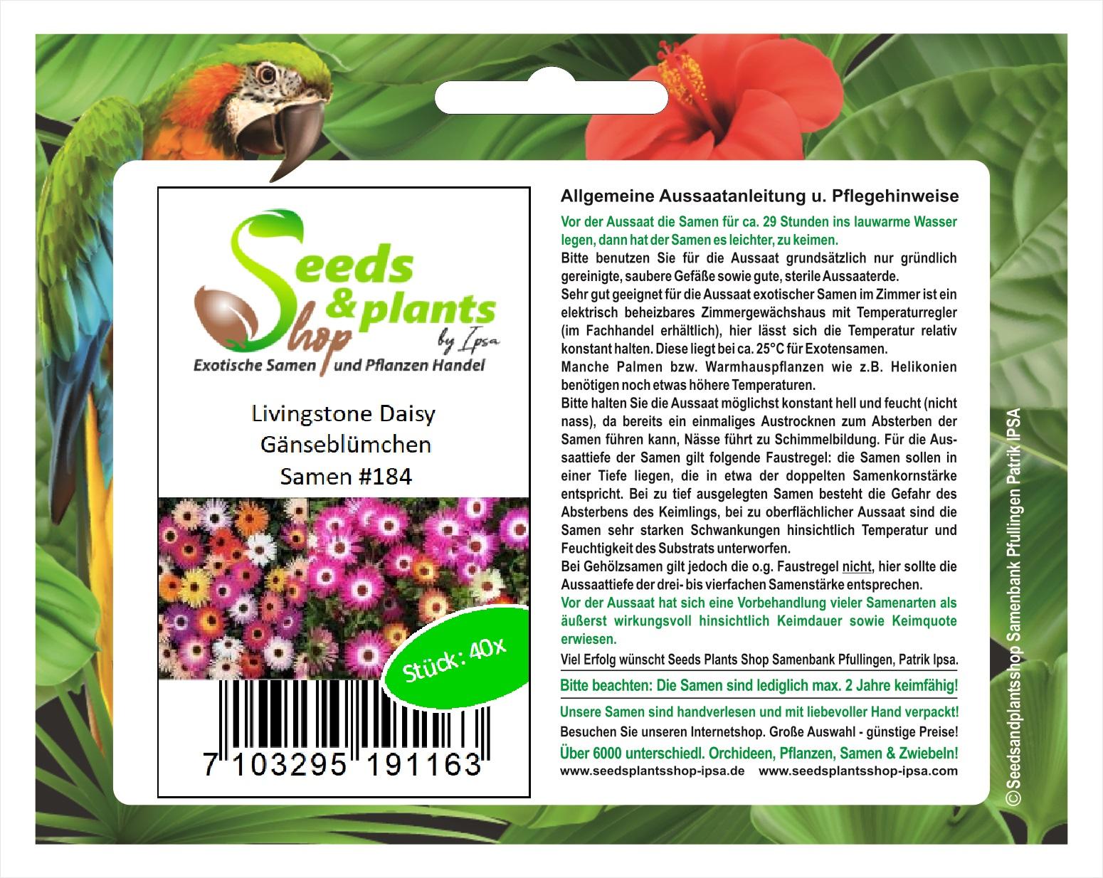 Windschutz schöne Farbgebung ca.50 Samen Lila Pampas Ziergras