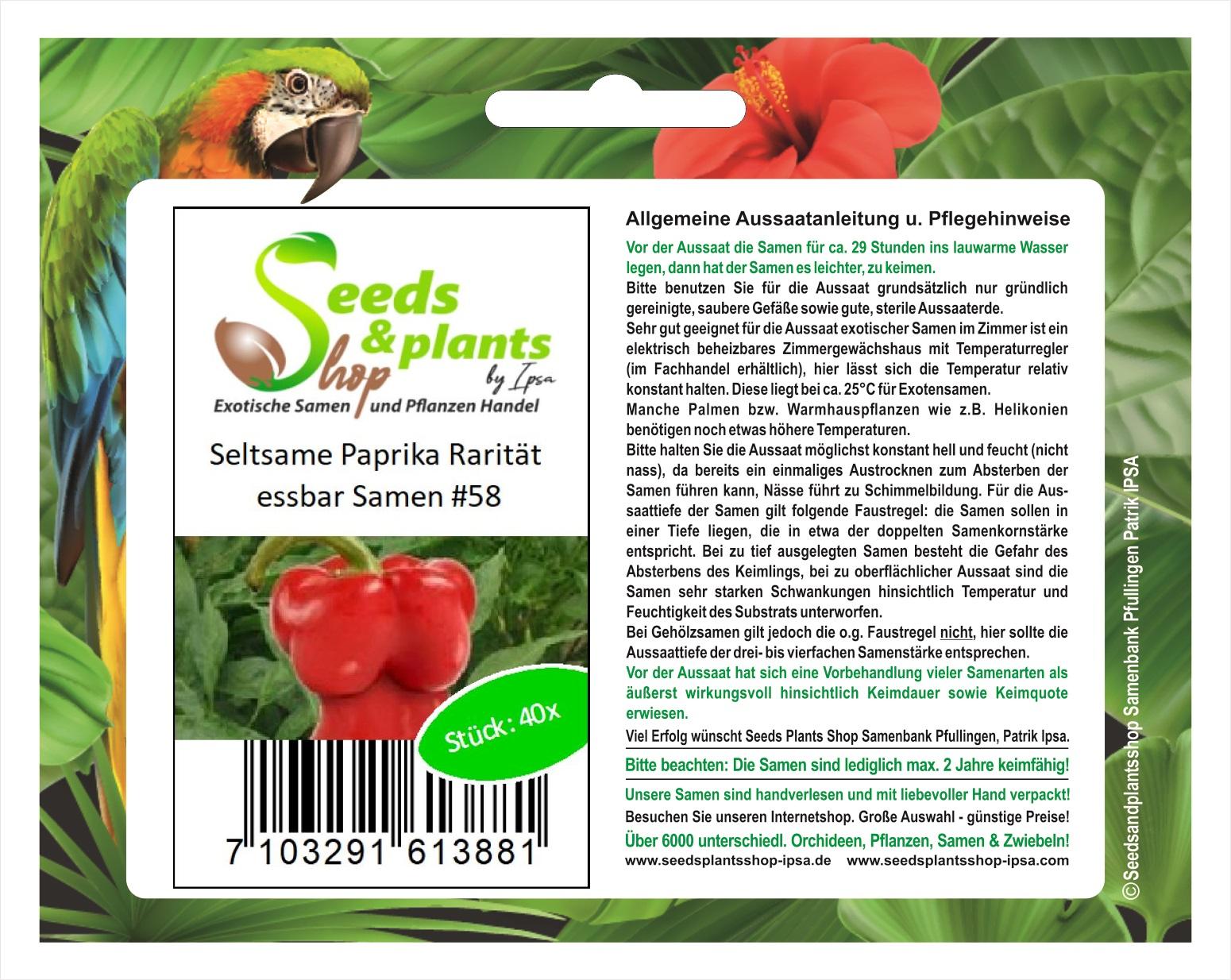 ️ Chinese Giant Paprika süss alte Sorte 10 frische Samen Balkon Kübel