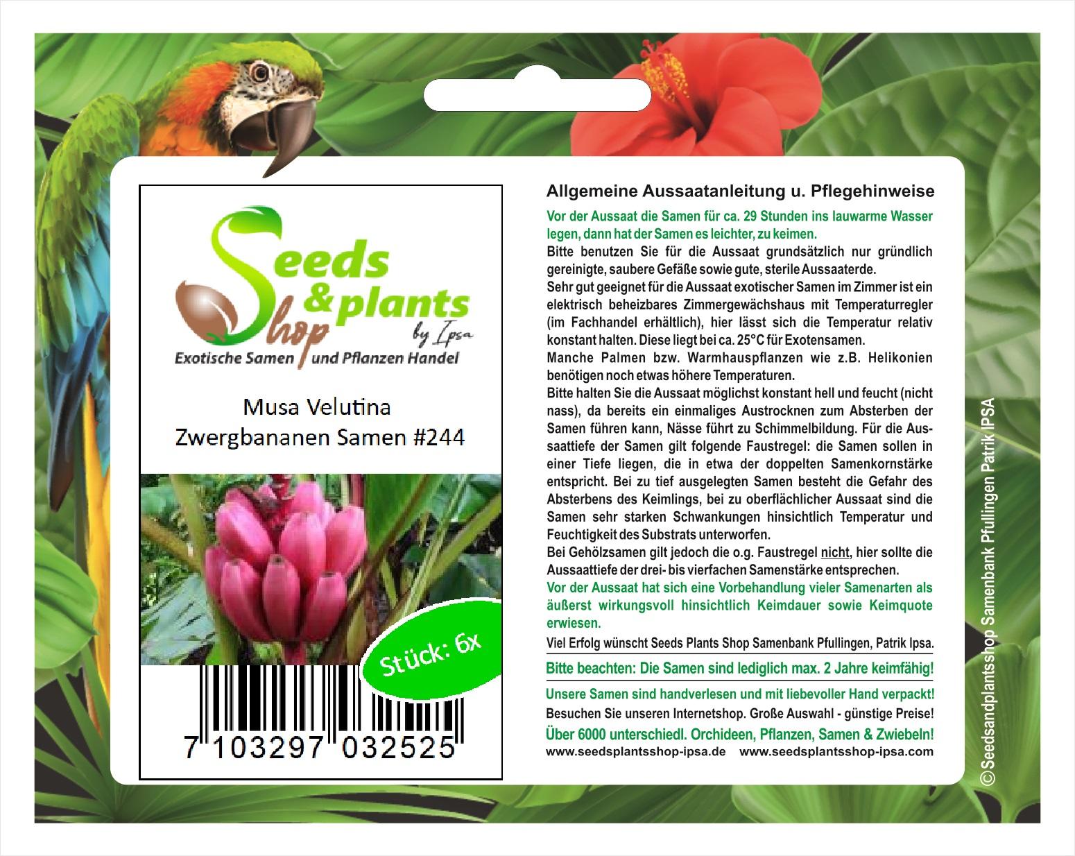 Stk Seeds Plants Shop Samenbank Pfullingen Patrik Ipsa Samen #244 6x Musa Velutina Zwergbananen Obst Pflanzen