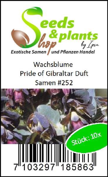 10x Wachsblume Pride of Gibraltar Duft Samen Garten Pflanze Blume #252