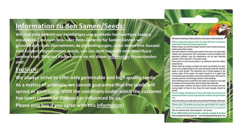 25x Gelbe Kiwi Selbstbefruchtend Samen Obst Gelb Garten Pflanze #108