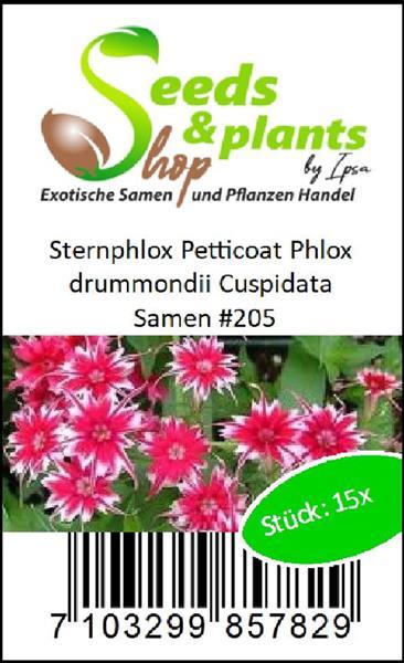 Sternphlox /'Petticoat/' 30 samen Phlox drummondii Cuspidata