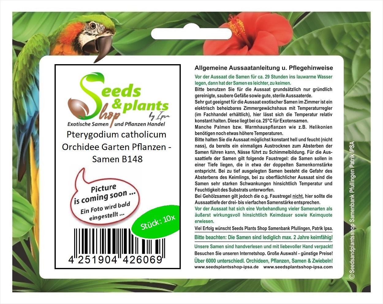 Samen B148 10x Pterygodium catholicum Orchidee Garten Pflanzen